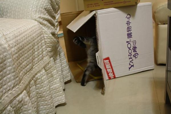 又跑到箱子裡