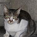 【TNR】貓貓們近況  024.jpg