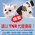 TNR.jpg