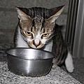 【TNR】貓貓們近況  027.jpg
