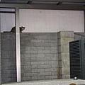【TNR】貓貓們近況  038.jpg