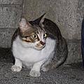 【TNR】貓貓們近況  019.jpg