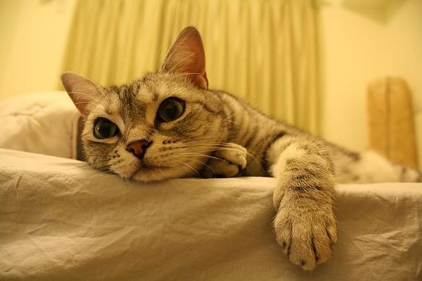 床邊的Fi妞-好口愛阿