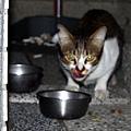 【TNR】貓貓們近況  009.jpg