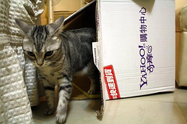 馬麻愛點哥 我愛箱子