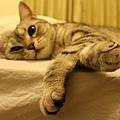 床邊的Fi妞-