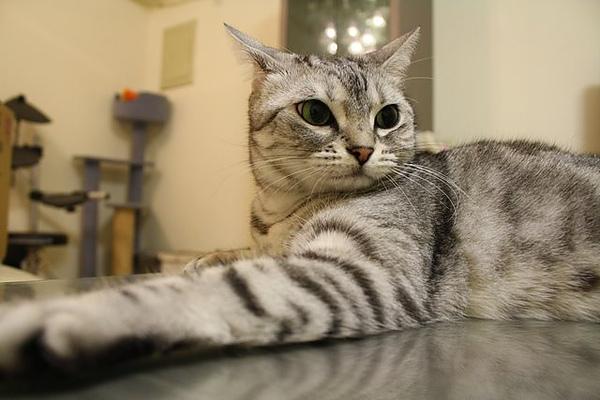 獨家贈送FiFi與點哥第一次親密接觸之-個貓照