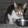 【TNR】貓貓們近況  031.jpg