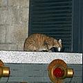 【TNR】貓貓們近況  047.jpg
