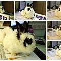 20100808TNR-抓到貓+鄰居寵物2.jpg
