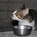 【TNR】貓貓們近況  029.jpg