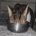 【TNR】貓貓們近況  028.jpg