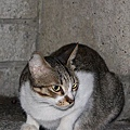 【TNR】貓貓們近況  025.jpg