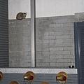 【TNR】貓貓們近況  040.jpg