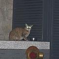 【TNR】貓貓們近況  046.jpg