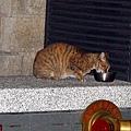 【TNR】貓貓們近況  043.jpg