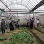設施栽培蔬菜-2.jpg