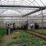 設施栽培蔬菜-3.jpg