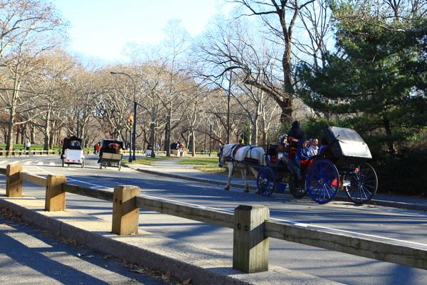 紐約中央公園內馬車緩緩駛過