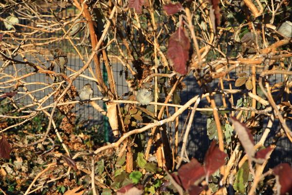 這棵樹上以及周圍有著滿滿的小鳥