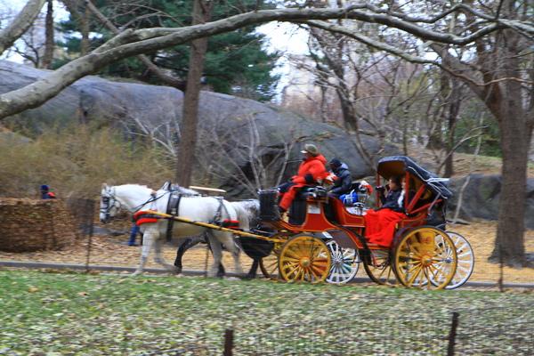 紐約中央公園內處處可見公主馬車