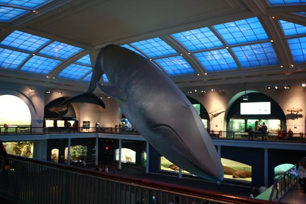 超大型的鯨魚掛在魚類區中間