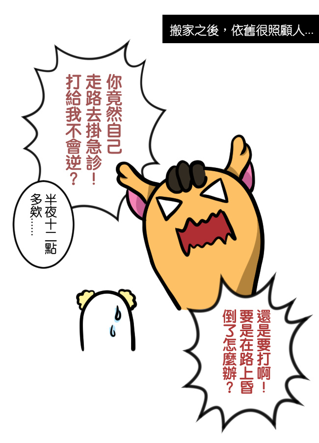 與笨貓相遇篇-生日快樂11