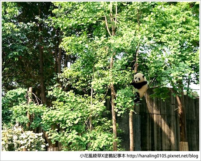 20170429四川熊貓基地