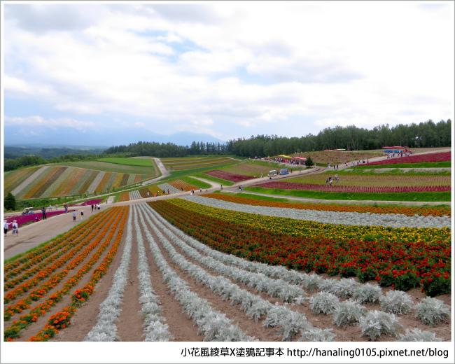 20180720北海道富良野薰衣草