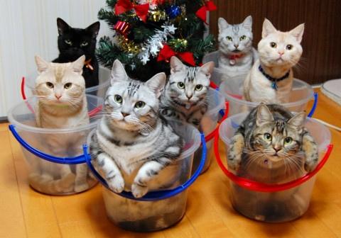 史上最強貓咪收納法2.bmp