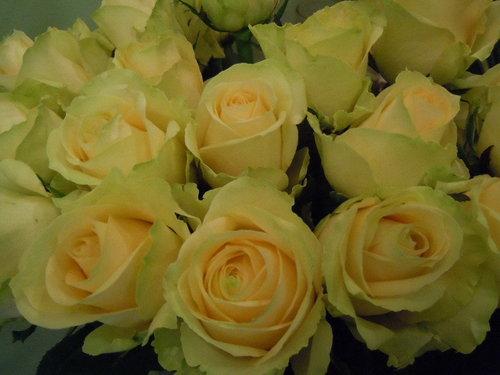 膚色玫瑰.jpg