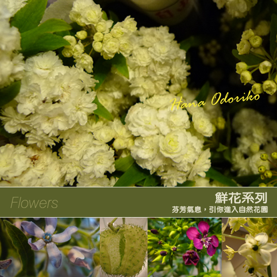0415鮮花系列-A.jpg