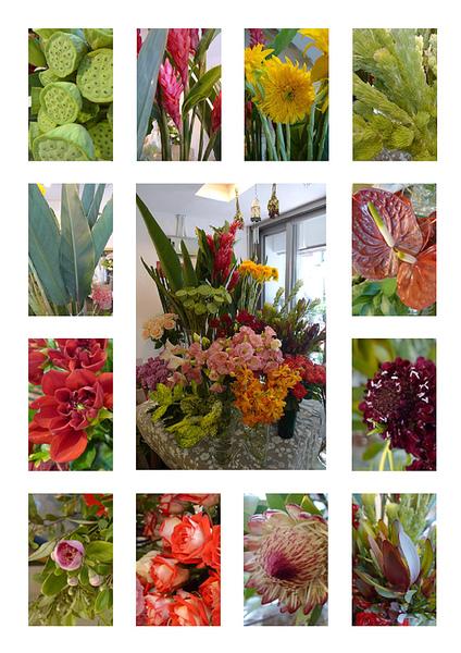 2010-05-26 進花拍攝-調整.jpg