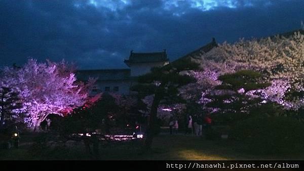 姬路城夜櫻-1.jpg