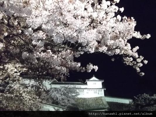 姬路城夜櫻-8.jpg
