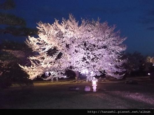 姬路城夜櫻-14.jpg