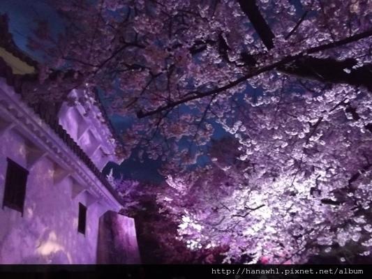 姬路城夜櫻-12.jpg