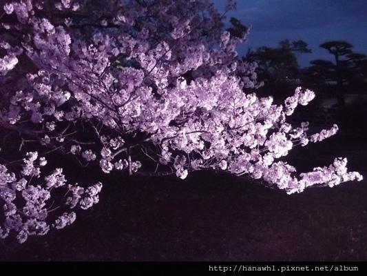 姬路城夜櫻-16.jpg