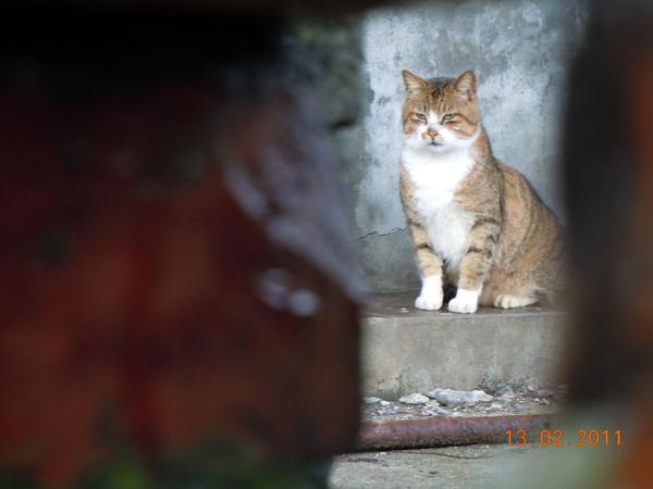 DSCN0538-虎斑貓.jpg