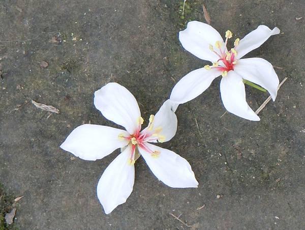 DSCN0713-flower-2.jpg