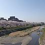 2011Kyoto Sakura 007.JPG