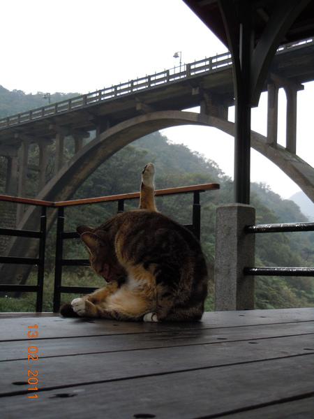 DSCN0565-貓瑜珈.jpg