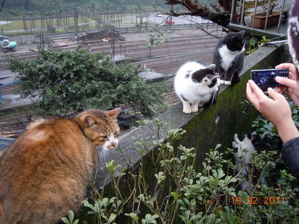 DSCN0503-照3隻貓.jpg