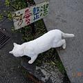 DSCN0451-貓愛整潔.jpg