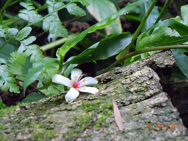 DSCN0732-flower-5.jpg