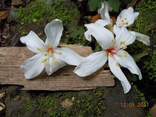DSCN0738-flower-7.jpg