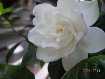 DSCN0764-1.jpg