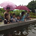 中社花園餵魚