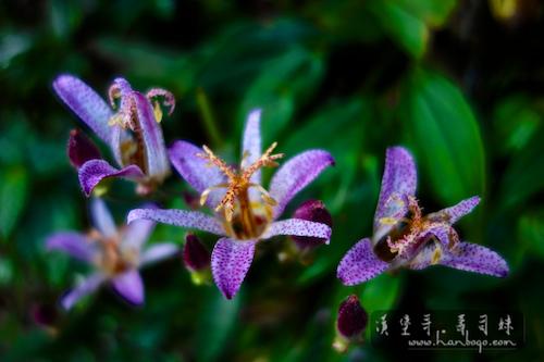杉林溪_Hanbogo 653.jpg