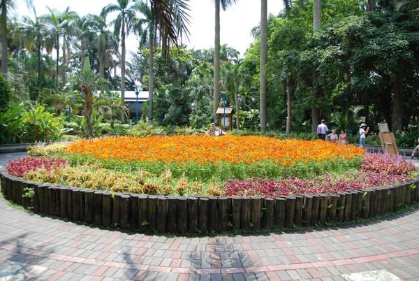 植物園一進去的大花圃